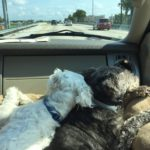 Got Pets? Let's Talk About Off-Property Rental Homes for an Orlando Vacation